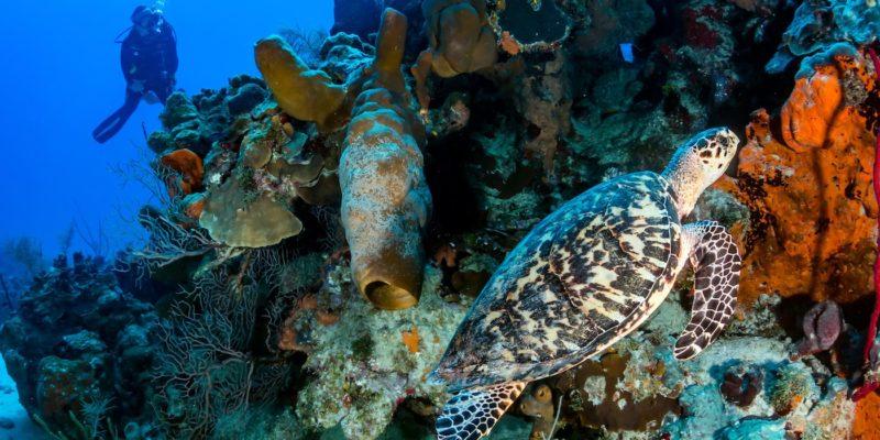 Acqua Adventures diving in Sosua