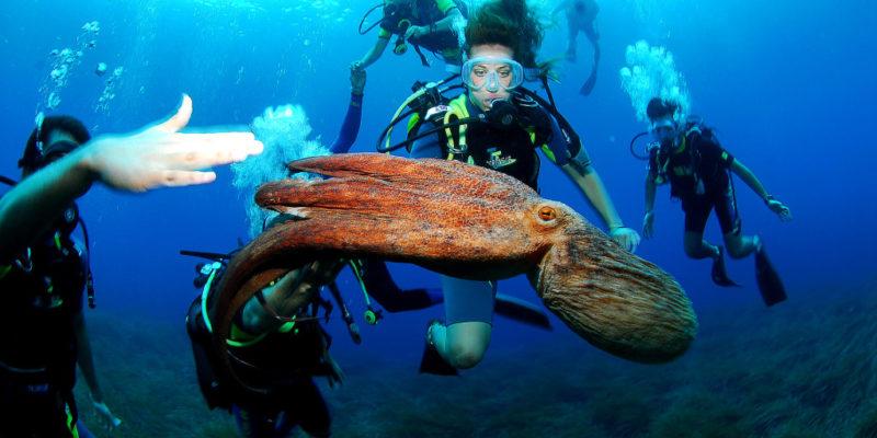 Acqua Center diving in Sosua