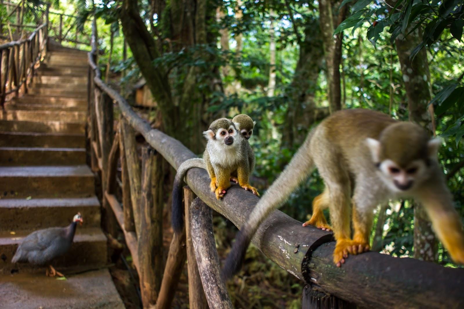 Monkey jungle Sosua Dominican Republic