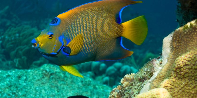 amazing fish transformations