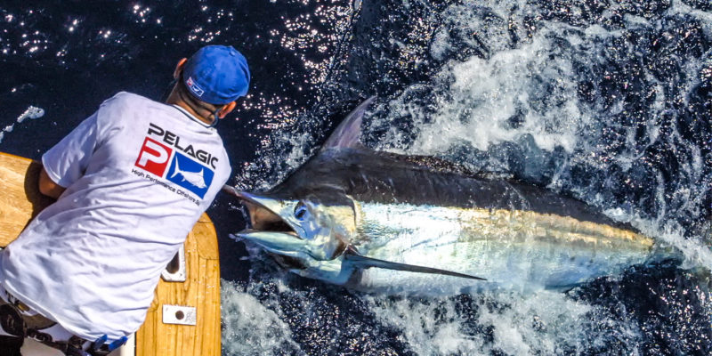 marlin fishing in Sosua Dominican Republic