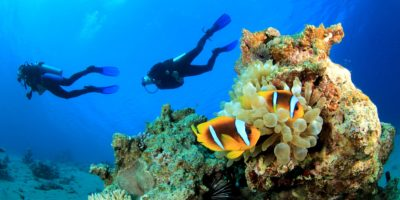 Sosua diving in the reef