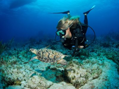 diver with turtle Sosua Beach