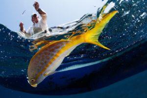 Fisherman hooking the fish