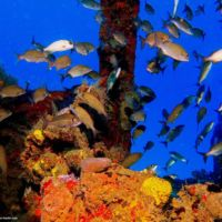 Zingara Wreck fish