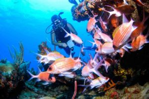 Diver and Squirrelfish